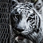 See The Rare & Exotic at Wildlife World Zoo