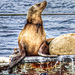 Photo of the Week – Lounging Sea Lions