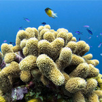 16 Underwater Photos – Diving the Belize Barrier Reef