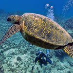 Scuba Diving Oahu, Hawaii Like A VIP