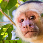 Wildlife Watching At Manuel Antonio National Park