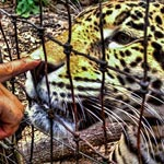 Visit the Belize Zoo & See the Animals of Belize